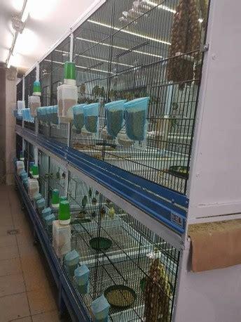 chillon gabbie projet cg1 cages chillon gabbie ruban leds