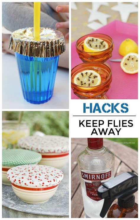 17 best ideas about keep flies away on gnat