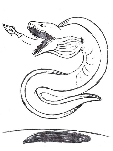 eel coloring pages download and print eel coloring pages