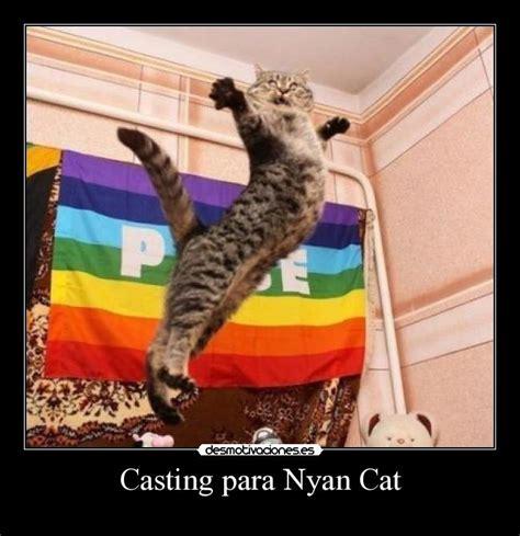 Gay Cat Meme - imagenes chistosas de cerveza wallpapers real madrid