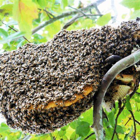 how to get rid of a beehive in your backyard how to get rid of a beehive how to get rid of stuff