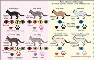 types of cat coloring cat colors neatorama
