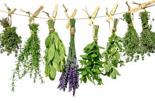 how to grow a herb garden how to grow a container herb garden