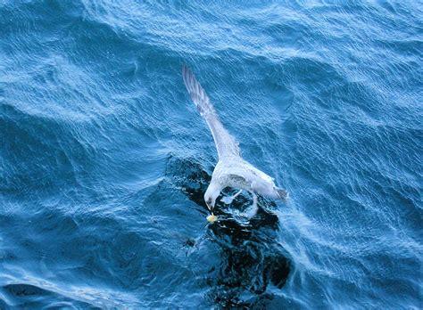 gabbiano mare gabbiano sul mare presso b 252 y 252 kada turchia viaggi
