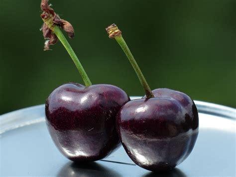 Madeline Mb Swt Purple free photo cherries fruit sweet purple free image on pixabay 167812