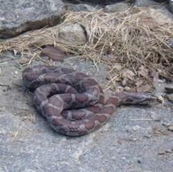 Garden Snake Connecticut Connecticut Snakes The Snakes Of Connecticut In My Garden
