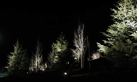 landscape lighting trees i can t hear in the living with hearing loss