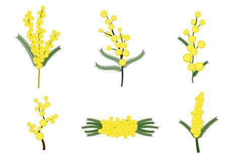 mimosa clipart free mimosa flower vector free vector
