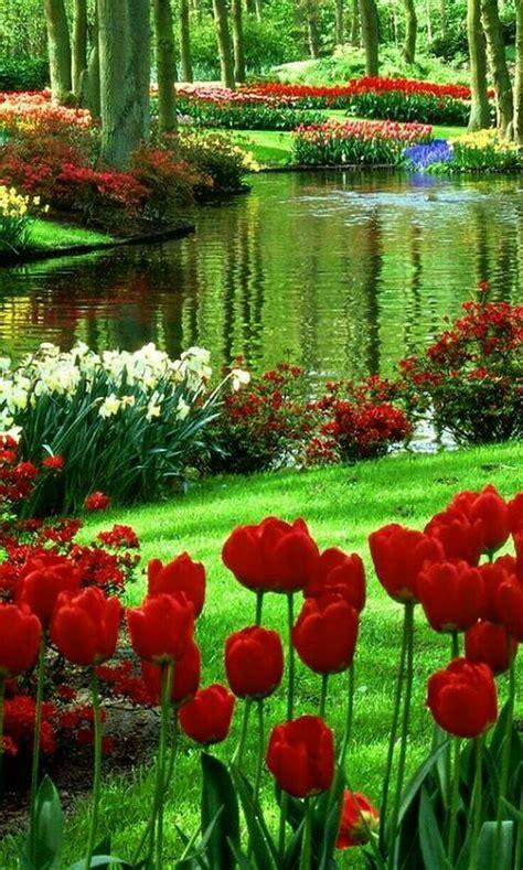Keukenhoff Amsterdam Wonders Of The World Pinterest Flower Garden In Amsterdam