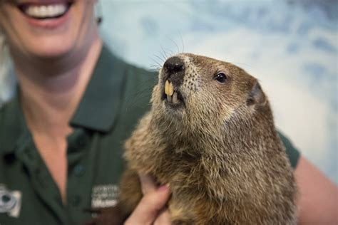 groundhog day events groundhog day programs and events calendar