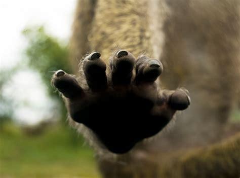 the monkey s paw theme essay monkey s paw summary essay tips