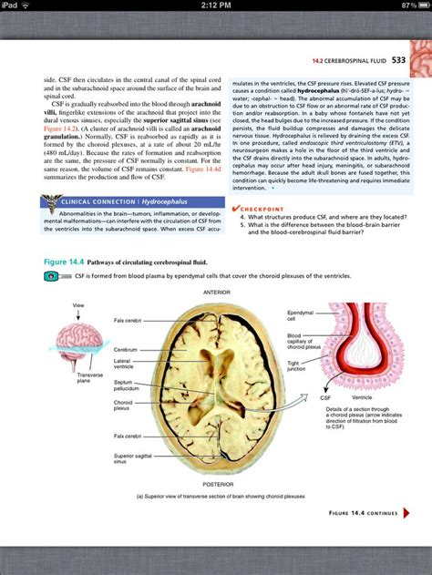anatomy and physiology coloring workbook chapter 7 cranial nerves 25 best ideas about cranial nerve 7 on