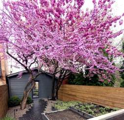 amazing small garden trees design nice trees for garden