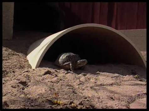 Southwest Style Homes How To Create A Turtle Habitat Youtube