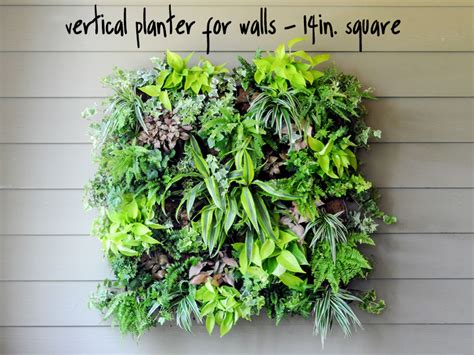 vertical planter green wall system diy living wall