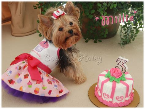bows for yorkies tiny yorkie hair bows breeds picture
