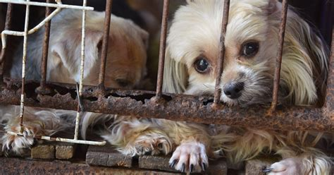 how to report a puppy mill hsus releases list of 101 problem puppy mills in the