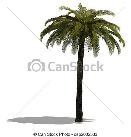 Pohon Pohonan Palm Palem 7cm drawings of 3d render of a palm tree with shadow and