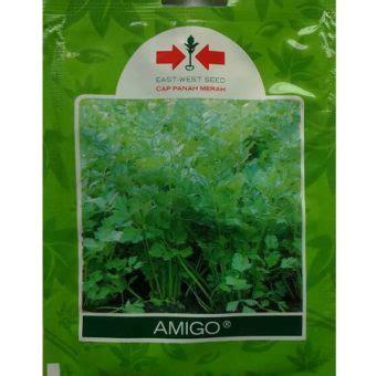 Benih Daun Seledri benih seledri amigo 20 gram panah merah bibitbunga
