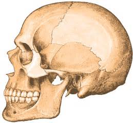 human skull clipart picture human skull gif png icon image