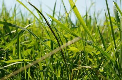 Rasen Kalken Zeitpunkt 5001 by Dolomitkalk Zusammensetzung Magnesiumkalk F 252 R Den Garten