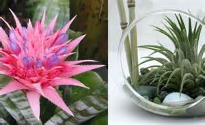 Plants That Don T Need Sunlight To Grow by Plants That Don T Need Soil Nature S Wonders