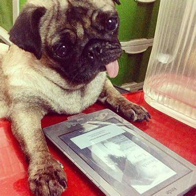 see pug run book 10 random photos to start your week spot ph