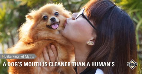 are dogs mouths clean debarking pet myths a s is cleaner than a human s