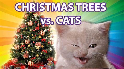 funny cats in christmas trees cats vs trees