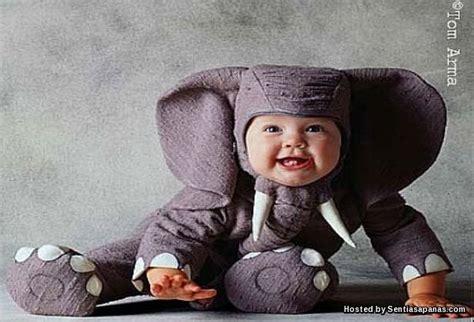 Gajah Lucu kisah murid dan gajah yang lucu sentiasapanas