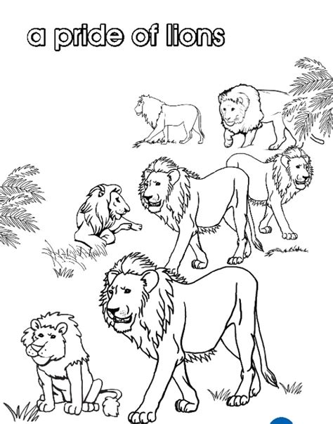 lion pride coloring page pride the lion colouring pages