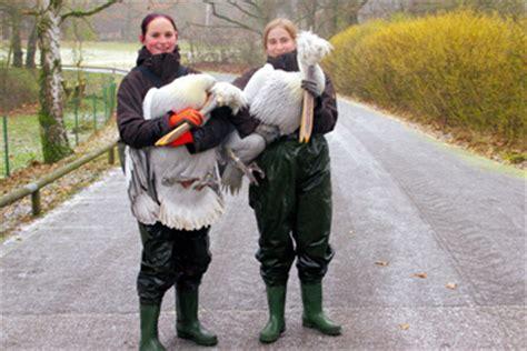Praktikum Bewerbung Zoo Tierpfleger In Und Karriere Stadt N 252 Rnberg