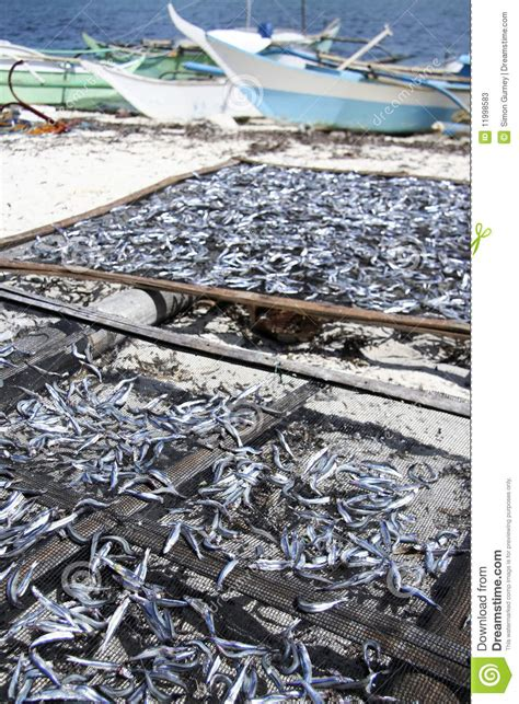 price of fishing boat in the philippines malapascua dried fish fishing boats philippines stock