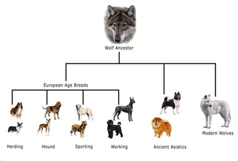 the domestication how wolves and humans coevolved books book topic genetic manipulation of dogs draft hybrid