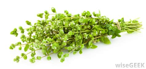what is origanum with pictures