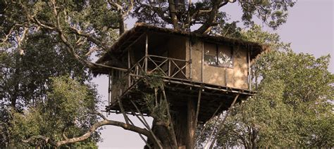 treehouse cottages in innthewild masinagudi resorts jungle homestay hotels in