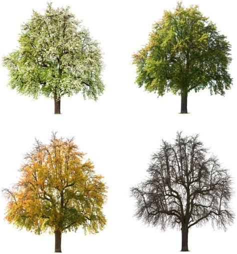 trees images trees hd picture 1 free stock photos in image format jpg