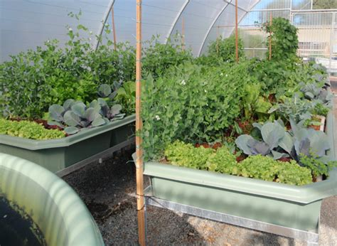 aquaponic grow beds peak certainty food resilience and aquaponics peak