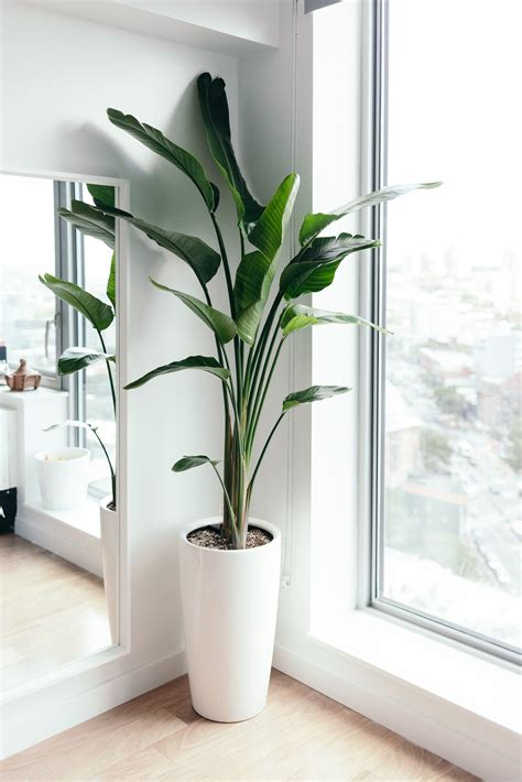 plant home decor work from home space birds of paradise plant h o m e