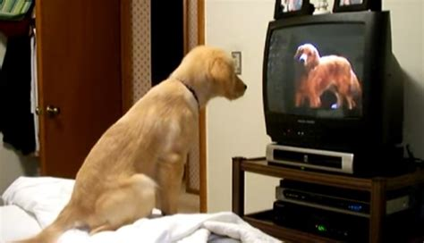 puppy tv this puppy dogs on tv made us smile