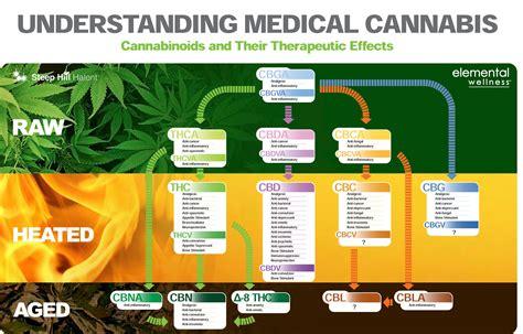 hemp cbd a primer on cannabinoids and cannabis medicine for better health books cbd in south africa cannabis dispensary