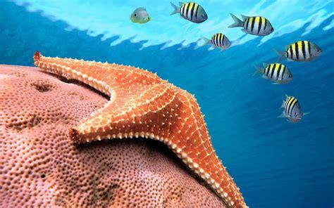 starfish images starfish hd wallpaper and background image
