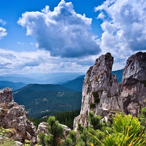 mountain bushes hd wallpaper hd latest wallpapers