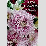 January Flower Of The Month Tattoo | 735 x 1102 jpeg 135kB