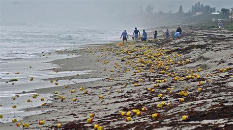 imagenes locas en la playa cosas locas y raras encontradas en la playa cuidado titan