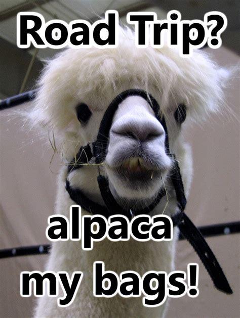 Alpaca My Bags Meme - skeleton puns related keywords skeleton puns long tail