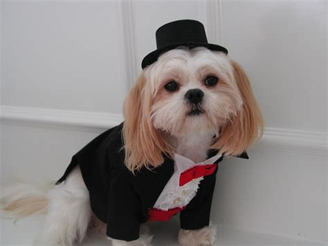 puppy tuxedo s tuxedo and collar to wear on wedding all about dogs