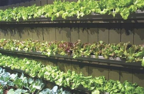 gutter vegetable garden creative ways to add to your privacy fence