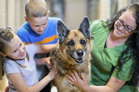 7 Great Animal Charities by World Animal Day Animal Charity Donations Tax Deductions