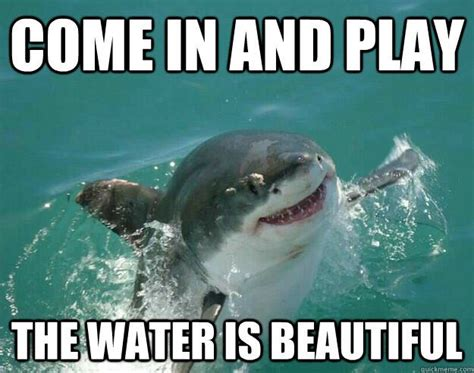 Shark Attack Meme - best 25 funny sharks ideas on pinterest shark humor